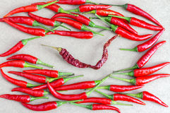 Dried chilli and fresh chilli. Sacrifices leader concept Stock Photography