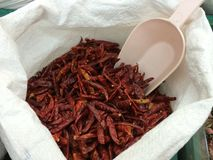 Dried chilli. Is herb Stock Image
