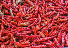 The Dried Chilli Royalty Free Stock Image