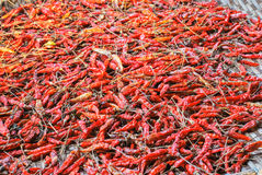 The Dried Chilli Royalty Free Stock Photography