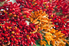 Dried chilli pepper Royalty Free Stock Images