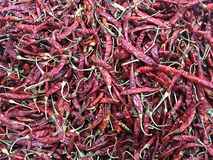 Dried chilli. Red color it spicy Stock Photography