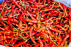 Dried chilli red Royalty Free Stock Photography