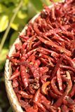 Dried chillies are many red pigments Stock Photo