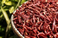 Dried chillies are many red pigments Stock Images