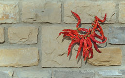 Dried chillies. Stock Image