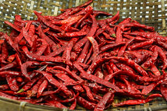 Dried chillies in the threshing basket Royalty Free Stock Images