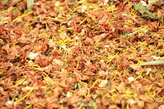 Dried chinese herb Royalty Free Stock Image