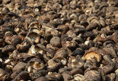 Dried chisese mushrooms. The Dried chisese mushrooms background royalty free stock photography