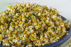 Dried chomomile flowers Stock Photography
