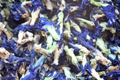 Dried clitoria ternatea background ,Butterfly pea tea royalty free stock photo
