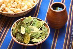 Dried Coca Leaves and Coca Tea Stock Photos