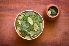 Dried Coca Leaves and Coca Tea. Overhead shot of dried coca leaves in bowl with fresh coca tea (mate de coca) on wood, photographed with natural light Royalty Free Stock Photos