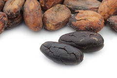 Dried cocoa beans and some peeled ones Stock Photos