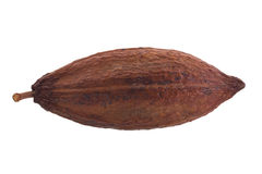Dried cocoa pod on a white background.  stock photos
