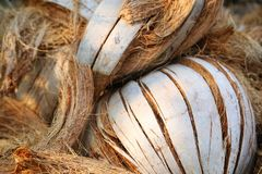 Dried coconut husk. Royalty Free Stock Image