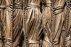 Dried coconut leaves. Royalty Free Stock Photos