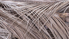 Dried coconut palm leaves Stock Photo