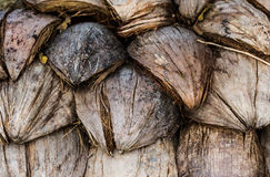 Dried coconut peels Stock Image