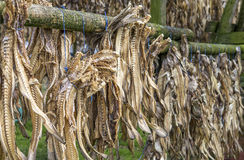 Dried cod Royalty Free Stock Image