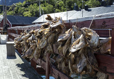 Dried cod heads Royalty Free Stock Photo