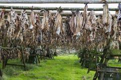 Dried cod Stock Photo