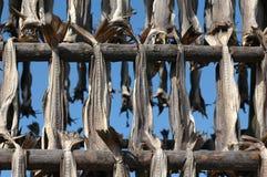 Dried codfish Stock Photos