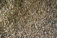 Dried coffee beans for roasting, Background and texture.  Royalty Free Stock Photos