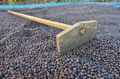 Free Dried Coffee Berries And Harrow Stock Photography - 38304792