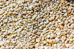 Dried coffee grains. Natural coffee grains dried in the sun ready to be roasted Stock Images