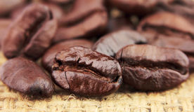 Dried coffee seeds Stock Photo