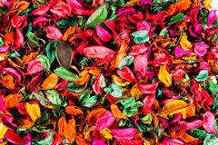 Dried colored flowers. Dried flowers on a lot of colors on white background top view Stock Image