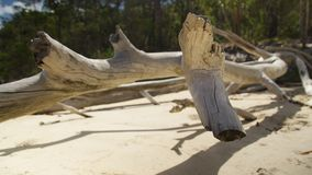 Dried and colored white driftwood by the beach stock video footage