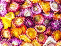 Dried colourful flowers Royalty Free Stock Photography