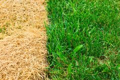Dried Composition. Green and yellow grass in a landscape composition respecting the rule of thirds Stock Image