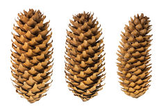 Dried cones spruce close up isolated on white background, texture Royalty Free Stock Photo