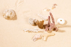 Dried Corals And Shell On Sand. Stock Images