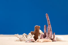 Dried corals and shell on sand Royalty Free Stock Image