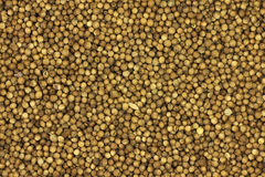 Dried coriander grain abstract Royalty Free Stock Photo