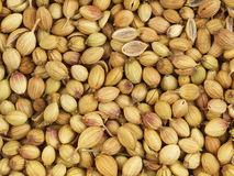 Dried coriander seeds Royalty Free Stock Photos
