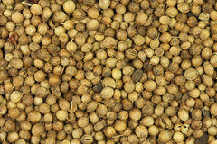 Dried coriander seeds  background Stock Photo