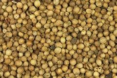 Dried coriander seeds  background Stock Photo