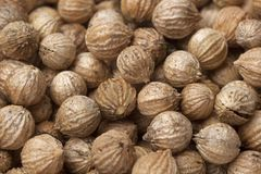 Dried coriander seeds close up Stock Photos