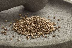 Dried coriander seeds Royalty Free Stock Image