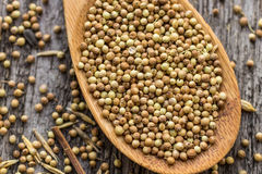 Dried coriander seeds in wooden spoon Royalty Free Stock Images