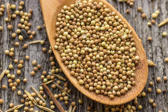 Dried coriander seeds in wooden spoon Royalty Free Stock Photos