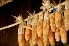 Dried corn Stock Photos