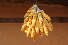 Dried corn Stock Photography