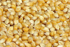 Dried corn Royalty Free Stock Image