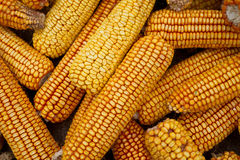 Dried corn background Stock Images